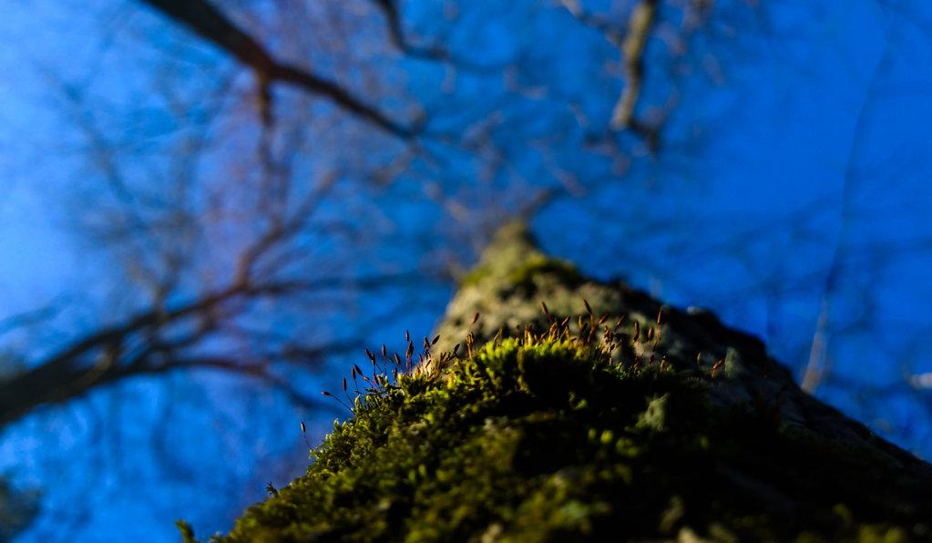kameraluuri-20150216-10-46-14-Pro-highres.jpg